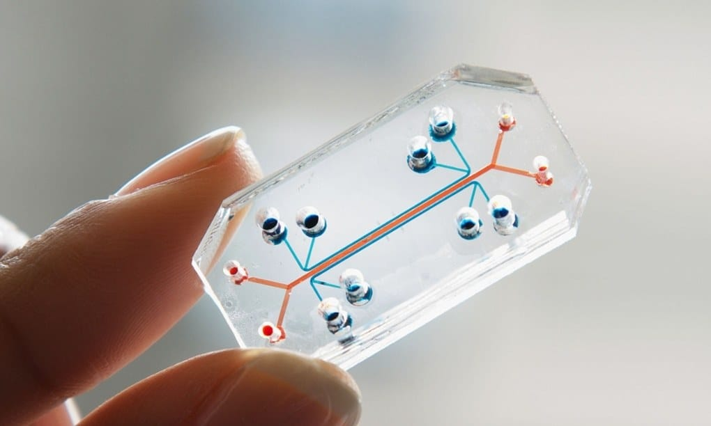"Expired: ""3-D Cell Cultures and Organ-on-a-Chip in the Pharmaceutical Toxicology and Pathology – Use and Applicability"""